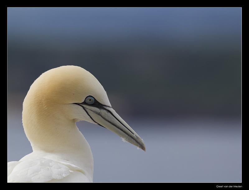 5740 gannet