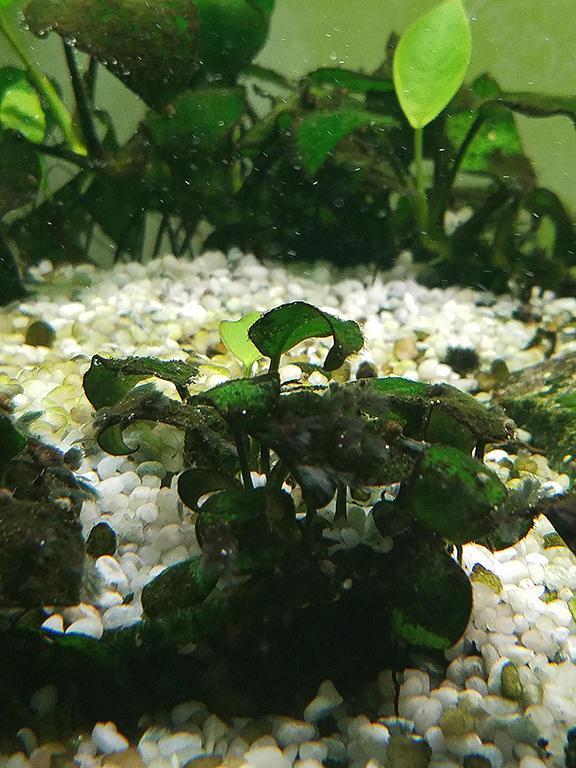 Fishtank Agae Problem