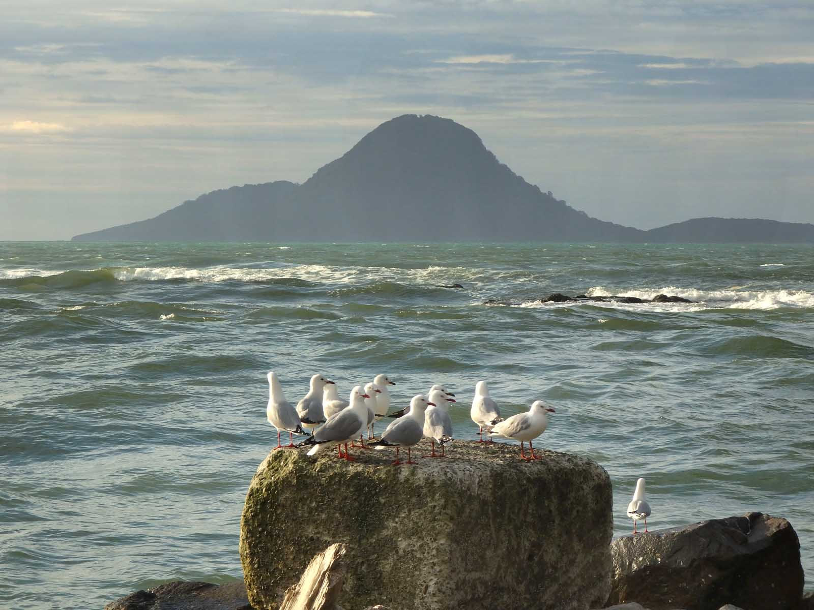 Gulls and Whale Island