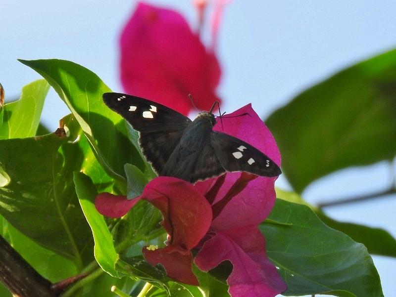 Butterfly sp.