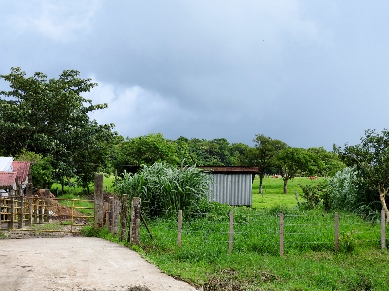 View at Curubanda Lodge