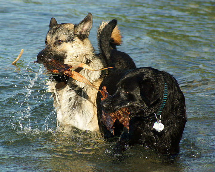 Dogs 09844 copy.jpg