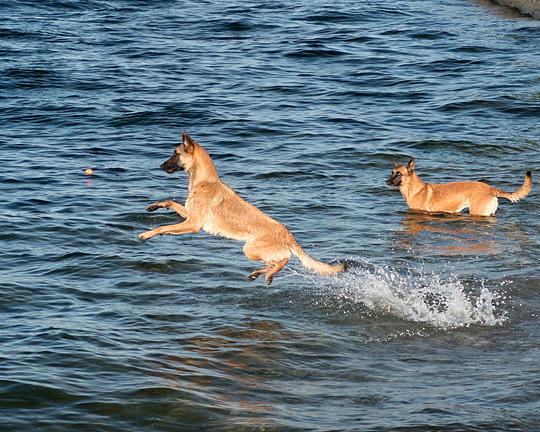 Dogs 8248 copy.jpg