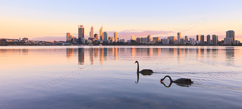 Black Swans on the Swan River at Sunrise, 27th March 2013