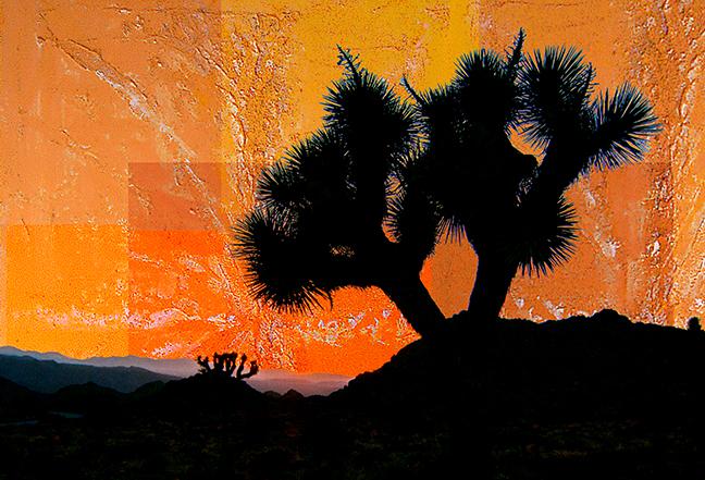 Joshua Tree Vivid Abstract