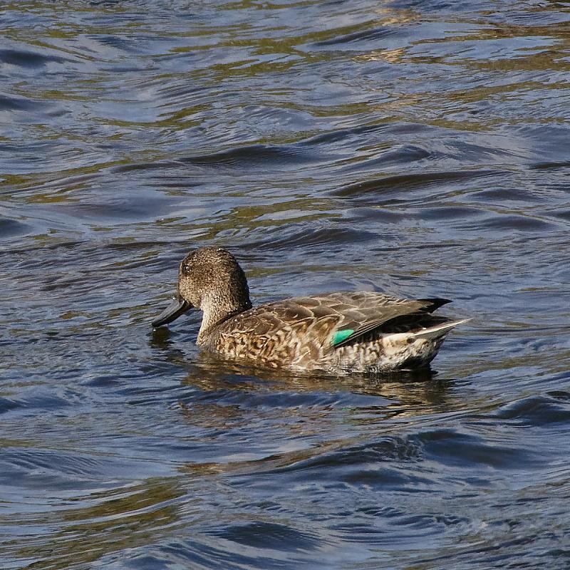 Duck between dives