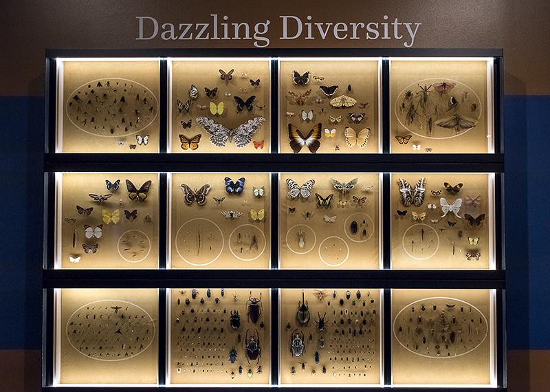 Objects of Wonder: Dazzling Diversity