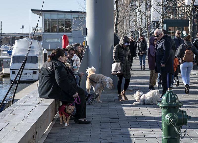 Encounter at District Wharf