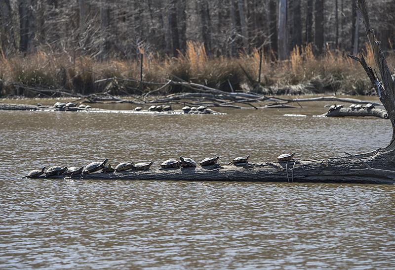 Turtle lineup