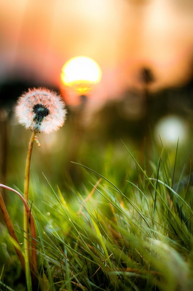 IMAGE: http://www.pbase.com/image/165440656/original.jpg