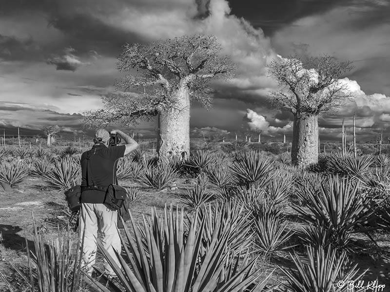 Baobab Trees, Mandrare Forest Lodge  5