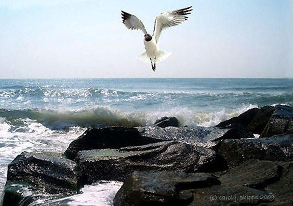 About Terns