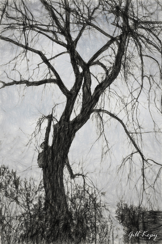 Winter_tree3
