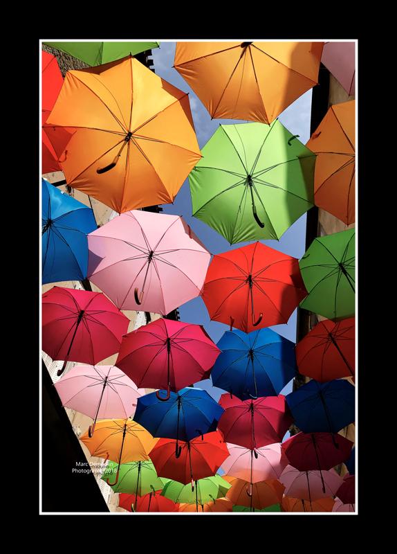 Umbrella street 11