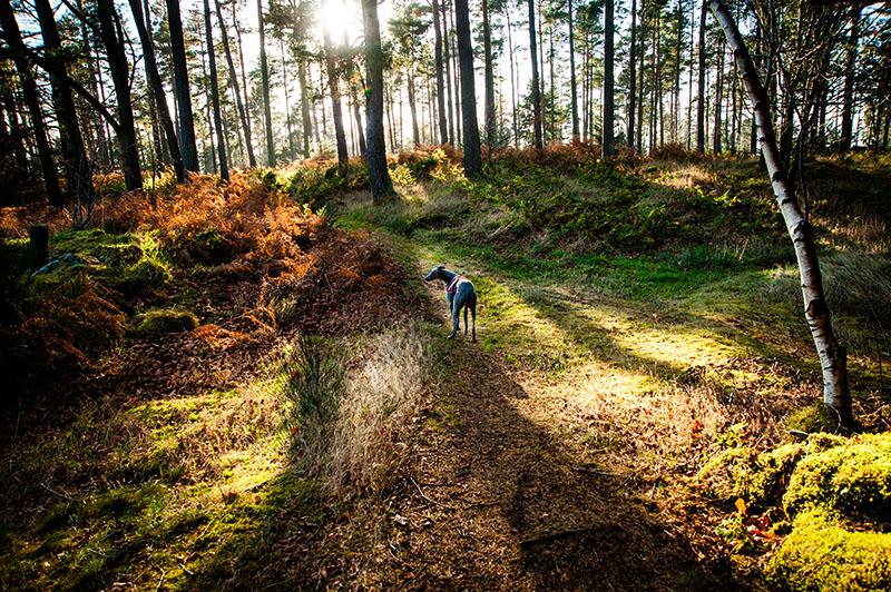 18th November 2018 <br> sunlit forest
