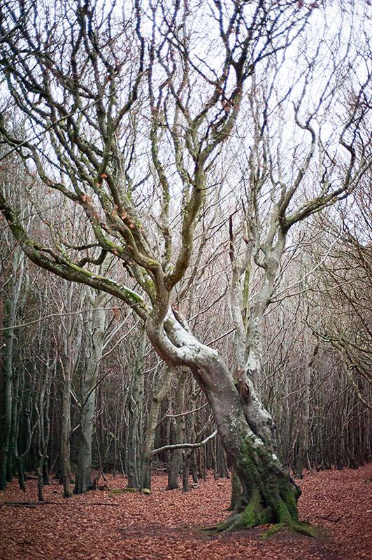 26th November 2018 <br> bendy tree