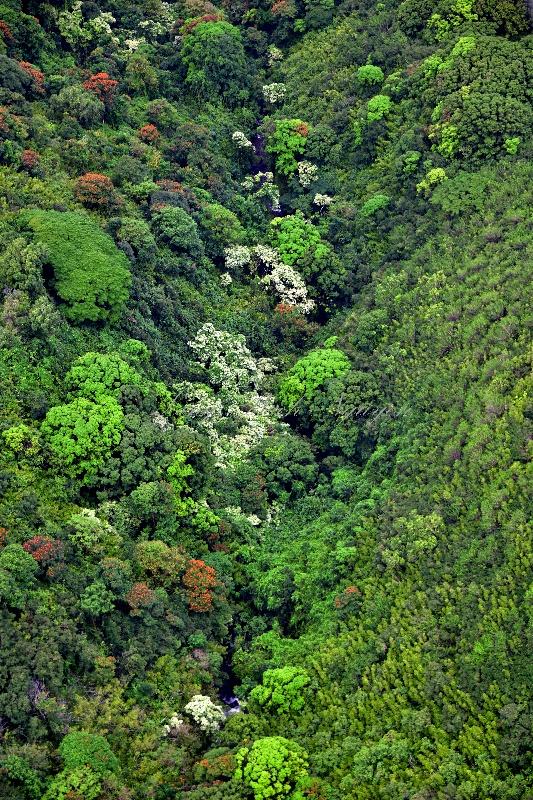 Tropical Forest on slope of Haleakala Mountain, Maui, Hawaii 284