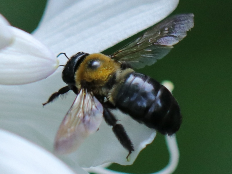 Star of the Pollinating World