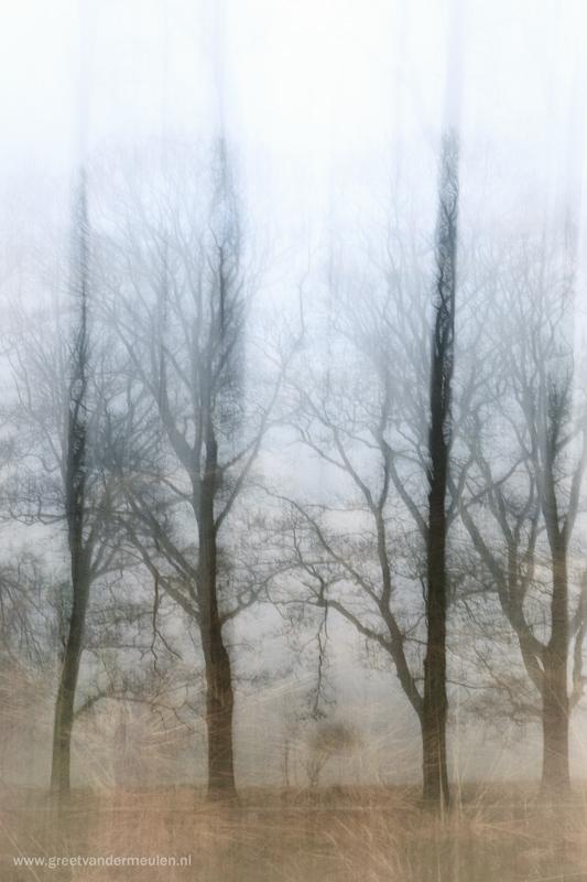 2N9B3449 trees in the mist