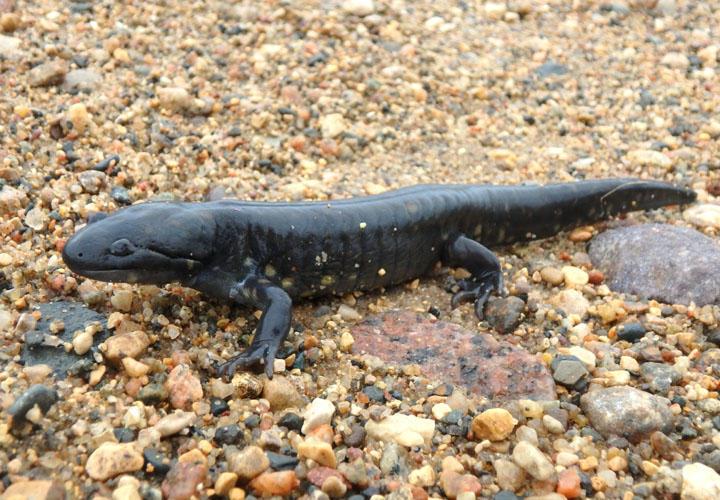 Salamander Benno-Goretex Mocas/ín Hombre