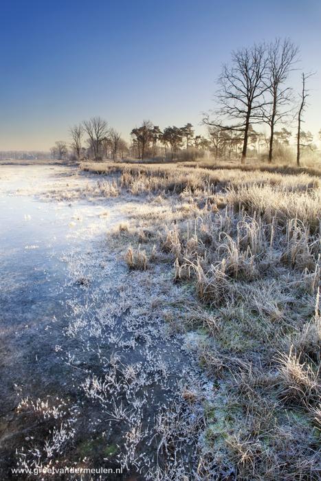 2N9B6601 heather and moor in wintertime