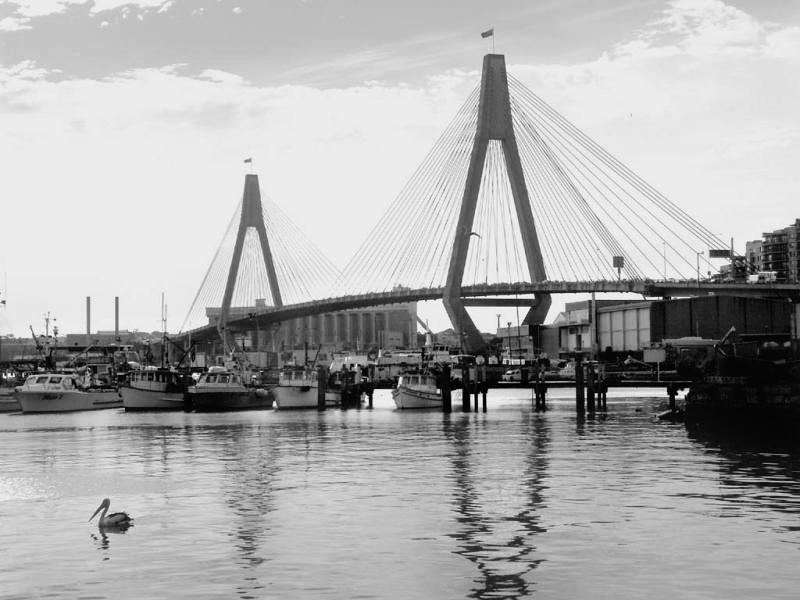 Anzac Bridge and pelican