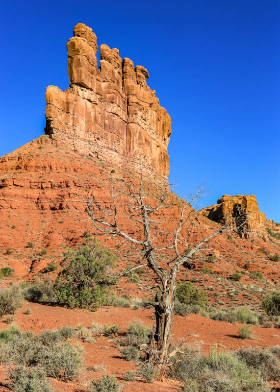 A dead tree framed by Stagecoach Rock in Valley of the Gods