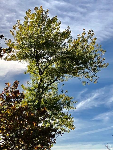 Dernieres feuilles avant l'automne