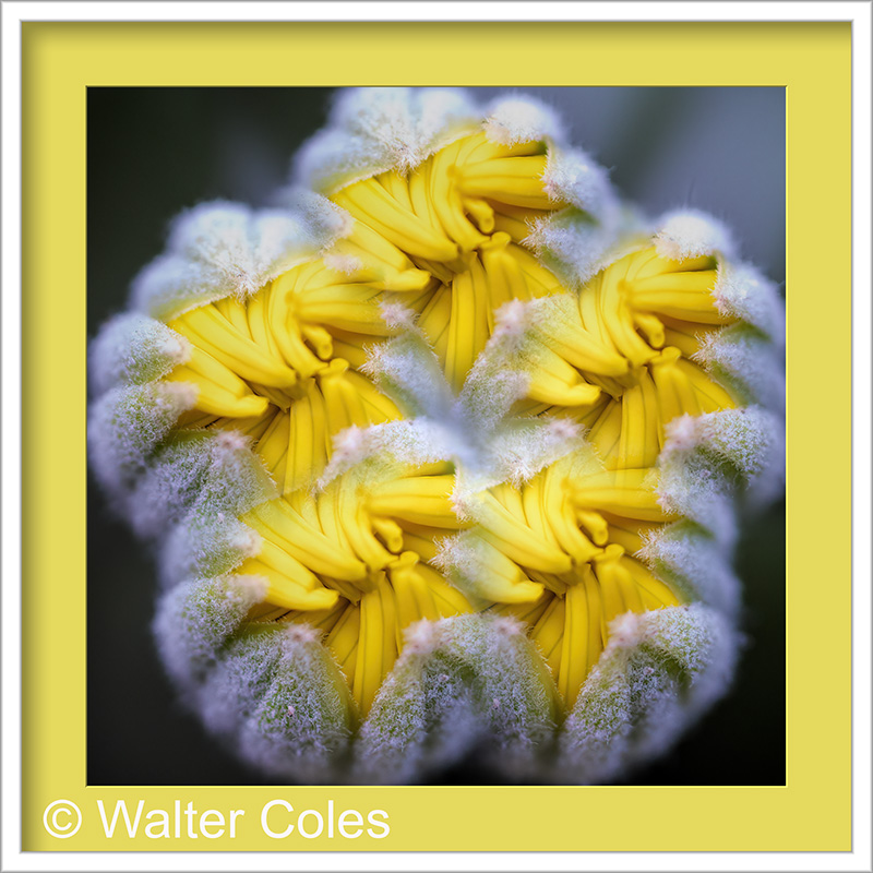 About_to_bloom_989_1_Lens_Effects_Frame_w.jpg