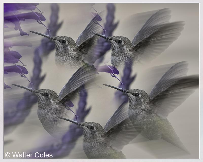 Hummingbird_32719_100400_II_2_Lens_Effects_Frame_w.jpg