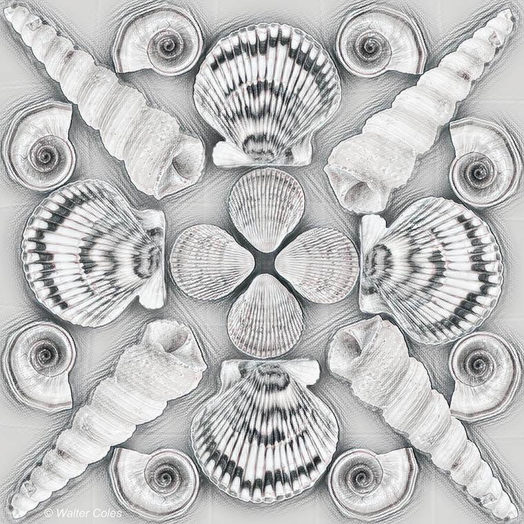Shells collage 4-27-20 Remax1 w.jpg
