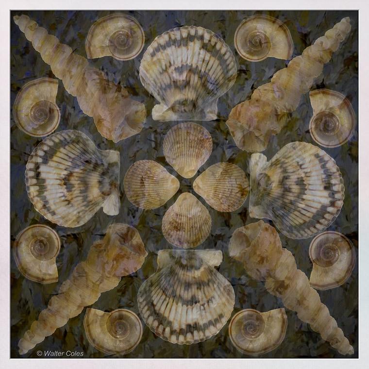 Shells collage 4-27-20 Texture Frame w.jpg