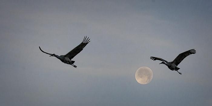 Full Moon Flyby
