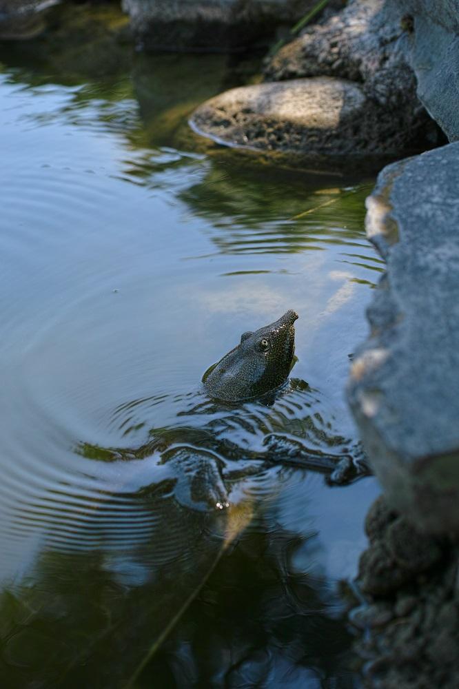 """Thème du mois d'août: """"Histoire d'eau"""" 169837427.Yyin9Zki.DP3M0381_1000"""