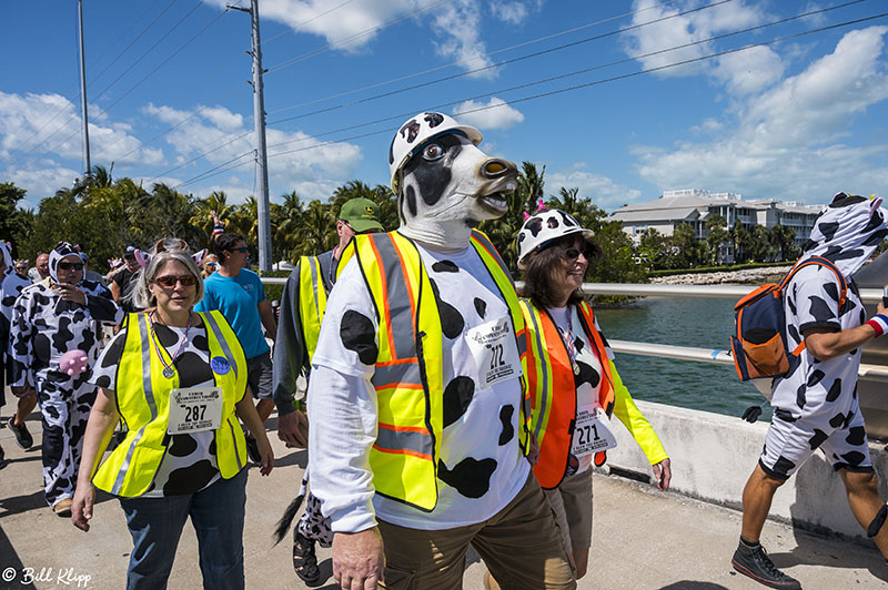 Cow Key Channel Bridge Run  28