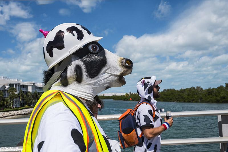 Cow Key Channel Bridge Run  1