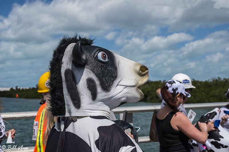 Cow Key Channel Bridge Run  13