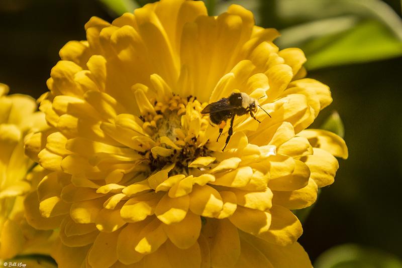 Bee on Flower  1
