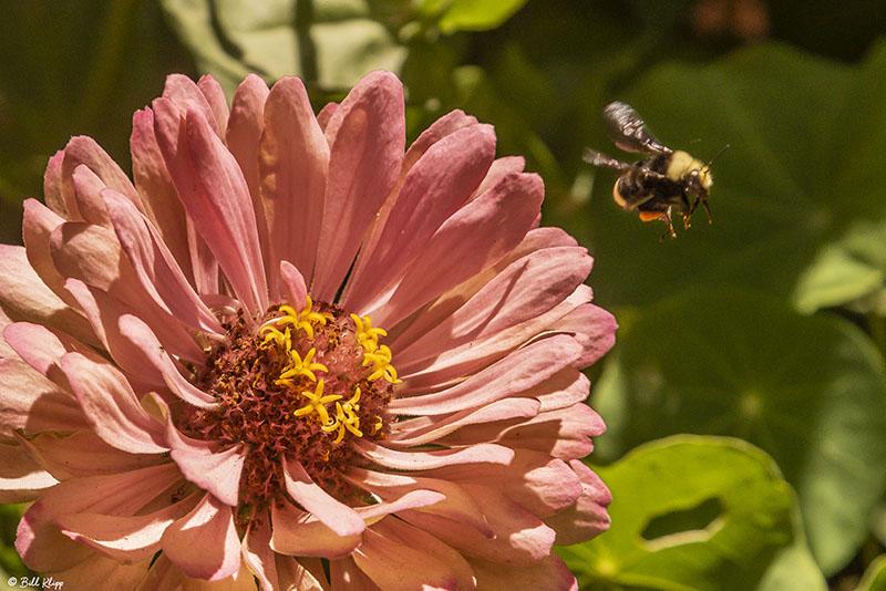 Bee on Flower  4