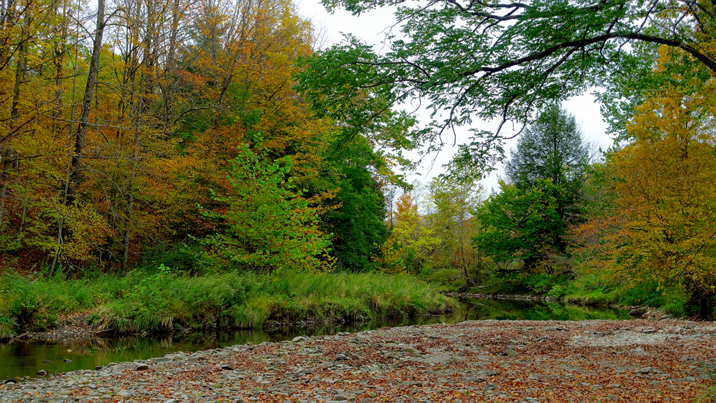 2019 Fall Foliage DSC08298_dphdr.jpg