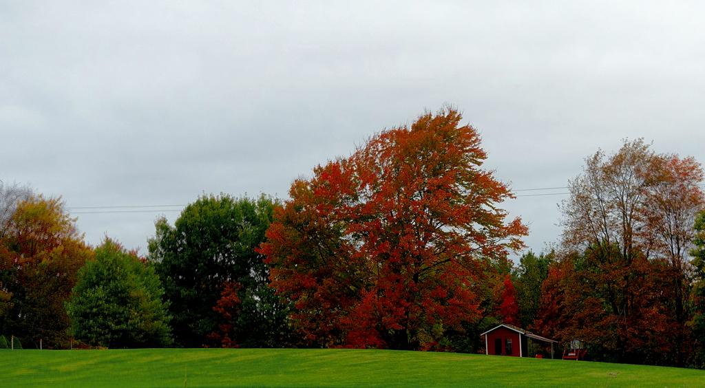 2019 Fall Foliage DSC08313_dphdr.jpg
