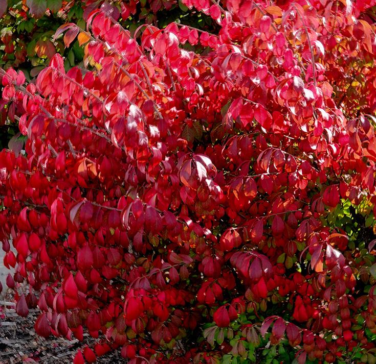 2019 Fall Foliage RX405503_dphdr.jpg