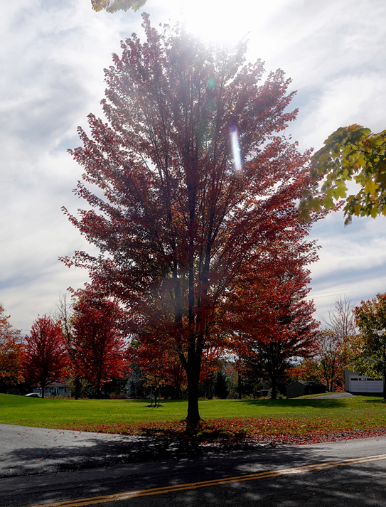 2019 Fall Foliage RX405521_dphdr.jpg