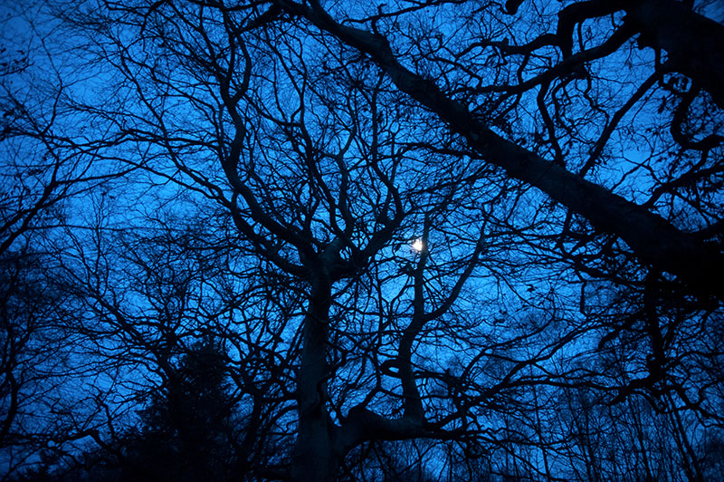 15th February 2019 <br> moonlight