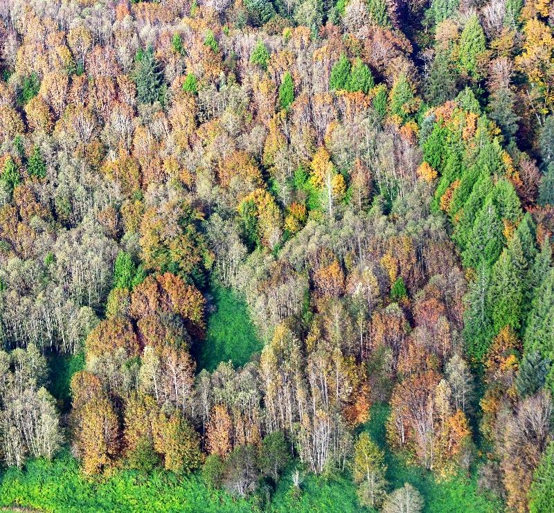 Fall Foliage along Skykomish River Valley by Sultan, Washington