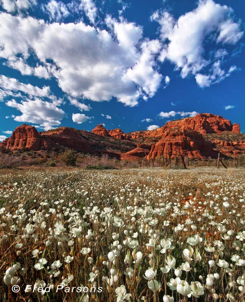 Boyton Canyon Flowers  # 5028