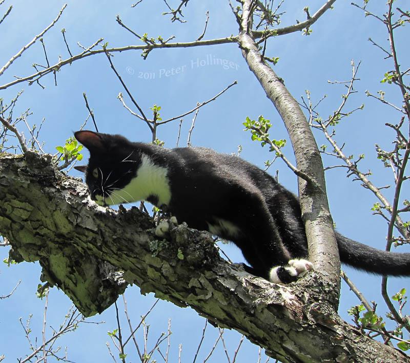 Jimi in the apple tree