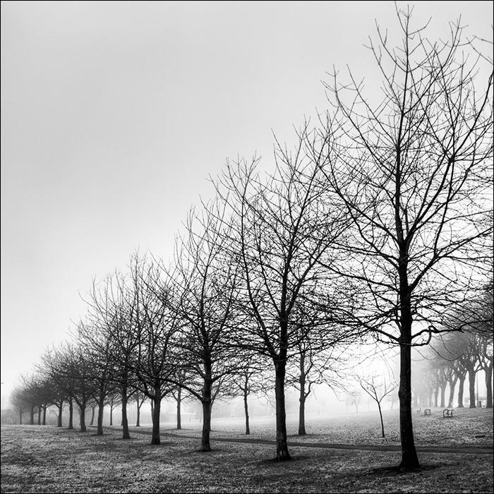 Treeline II.