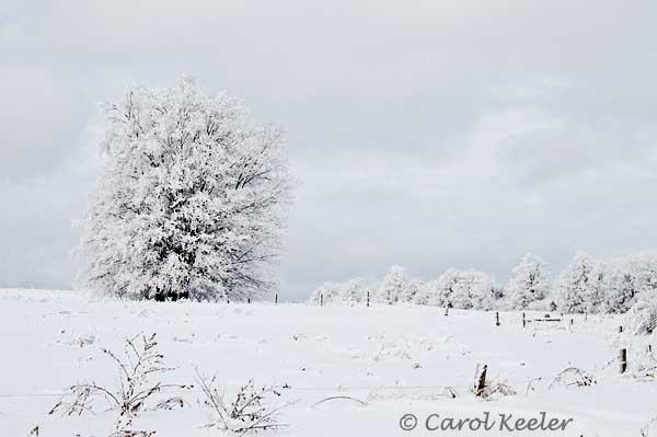 Fenner Winter Landscape