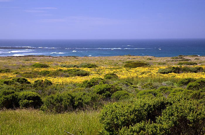 Coastal Wild Flowers